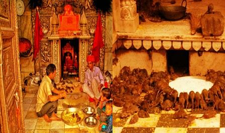 krni mata temple